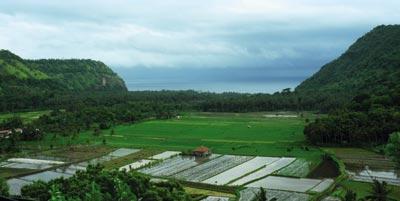 bale-bengong