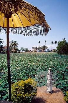 lotus-di-candidasa1